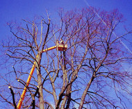 Baumpflegemaßnahme